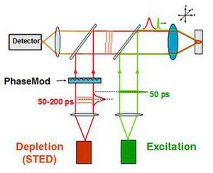 STED microscopy - Diagram of the design of a STED device. The double laser design allows for excitation and stimulated emission to be used together for STED.