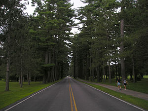 Outdoor recreation - Walking alongside towering trees lining the Avenue of the Pines in Saratoga Spa State Park, New York
