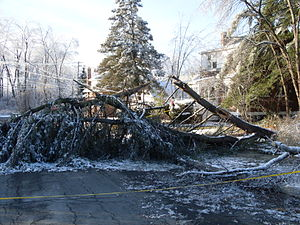 December 2008 Northeastern United States ice storm - Image: Fallen Tree December 08 Storm