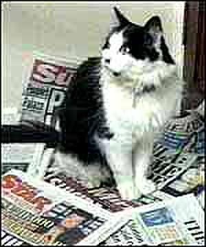 Humphrey (cat) - Humphrey after his retirement