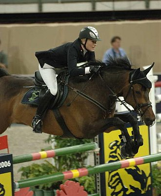 Sport horse - A warmblood sport horse shown over fences.