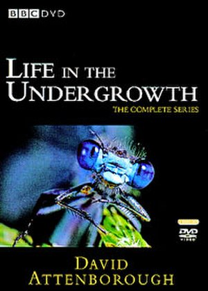 Life in the Undergrowth - Region 2 DVD cover