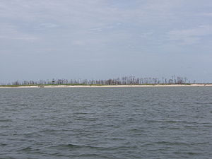 Petit Bois Island (Mississippi) - Petit Bois Island viewed from Mississippi Sound