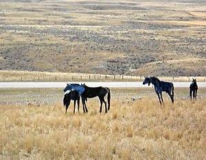 Bleu Horses - Part of the Bleu Horses herd