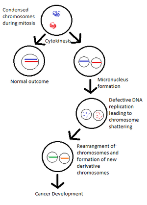 Chromothripsis - Schematic of Micronucleus model of chromothripsis