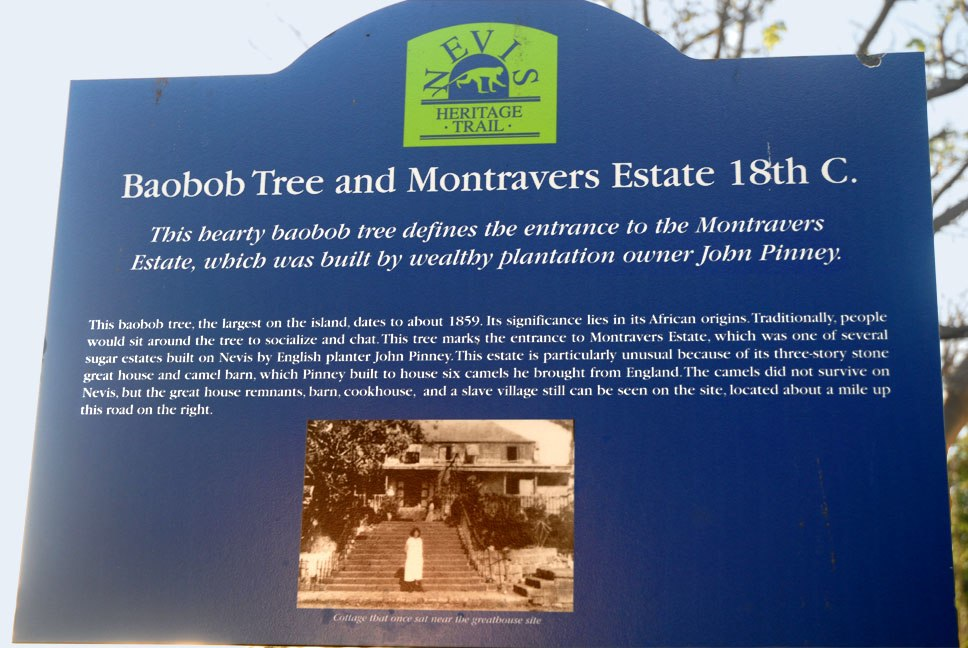 Nevis Montravers1