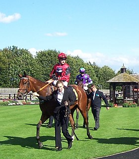 Oxted (horse) British Thoroughbred racehorse