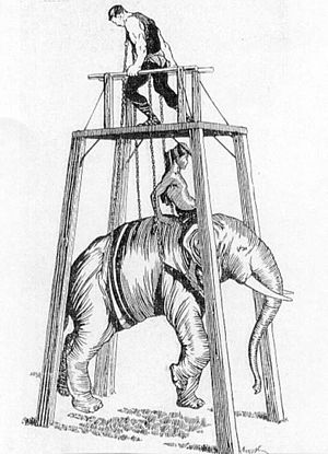 William Bankier - Bankier harness-lifting an elephant