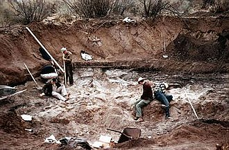 Lehner Mammoth-Kill Site - Excavations at the Lehner site, 1955, with the bone bed well exposed