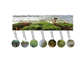 Louisiana Native Plant Nurseries