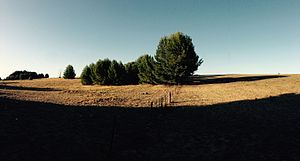 Hindmarsh Island - Typical grassland scene at Hindmarsh Island