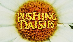Pushing Dasies