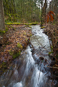 Sequalitchew-Creek-lower-canyon.jpg
