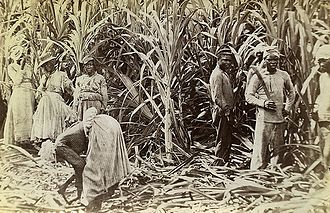 Colony of Jamaica - Image: Valentine and Sons Cane Cutters, Jamaica, 1891