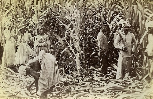 Valentine and Sons - Cane Cutters, Jamaica, 1891