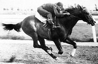 Go Man Go Quarter horse champion stallion