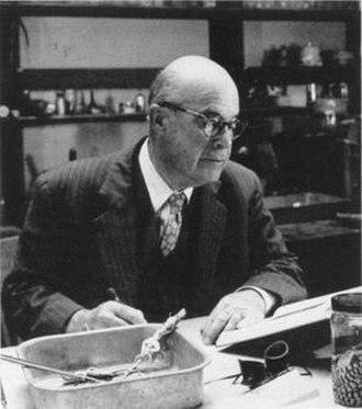 Joseph Richard Slevin - Slevin studying reptile specimens in 1953