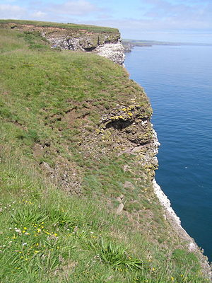Fowlsheugh - Clifftop at Fowlsheugh looking north