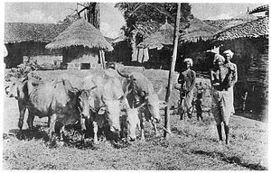 Kurmi - Image: Kurmi threshing