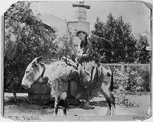 https://upload.wikimedia.org/wikipedia/en/thumb/5/57/Lou.henry.on.a.burro.at.acton.CA.1891.08.22.jpg/220px-Lou.henry.on.a.burro.at.acton.CA.1891.08.22.jpg