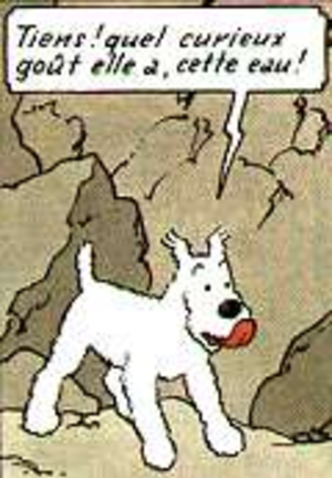 Snowy (character) - Snowy (Milou), by Hergé