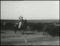 Edison film Cattle Bliss OK 1904.png