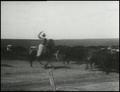 Edison film Cattle Bliss OK 1904.png