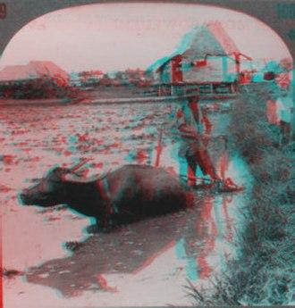 Underwood & Underwood - Image: Stereocard Carabao 3D