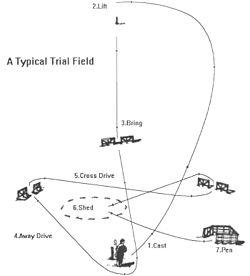 Field Trial Dog Training Equipment