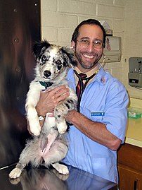 A responsible breeder checks each puppy for health and conformation.