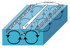 Lake ecosystem - Fig. 3 Illustration of Langmuir rotations; open circles=positively buoyant particles, closed circles=negatively buoyant particles