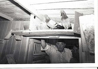Tippler - Gordon Hughes in his loft.