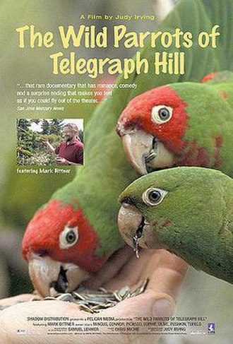 The Wild Parrots of Telegraph Hill - Image: Wild Parrots