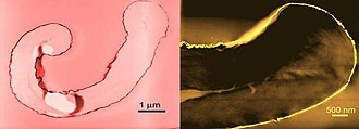 Nanofabrics - Electron microscope image of cotton fibers coated with gold (left) and palladium (right) nanoparticles. The nanoparticles make up just the outline of the fibers in these two images.