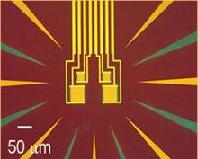 Image of four tungsten transition edge sensors.