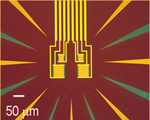 Transition-edge sensor - Optical image of four tungsten transition-edge sensors for near-infrared single-photon detection. Image credit: NIST.