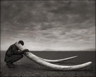 Nick Brandt - Ranger with Tusks of Killed Elephant, Amboseli, 2011
