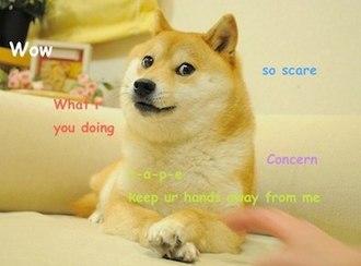 Doge (meme) - Image: Original Doge meme