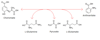 Anthranilate synthase - Chemical equation of reaction occurring in anthranilate synthase