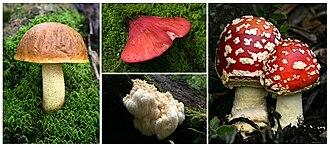 Chirripó National Park - Fungi of Chirripo National Park.