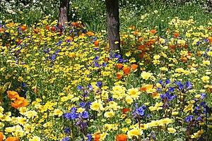 Garden design - Naturalistic planting design