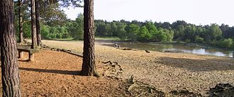 Horsell Common - The Sand Pits Panorama