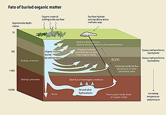 Oceanic carbon cycle - Fate of buried organic matter