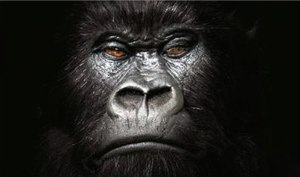 Gorilla (advertisement) - A promotional image from the Gorilla campaign.