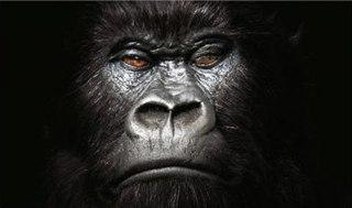 <i>Gorilla</i> (advertisement)