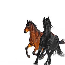 Old Town Road Remix cover.jpg