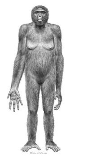 Ardi - Scientific paleoartist Jay Matternes' rendition of Ardi.