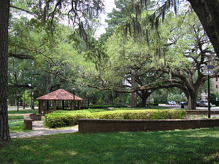 A green space near Landis and Gilchrist residence halls, on the main campus. These oak trees were planted by students in 1932 FSU greenspace 16June2007.JPG