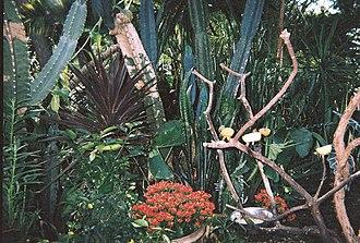 Bloedel Floral Conservatory - Image: Bloedel exotic plants 2