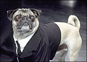 Frank the Pug - Frank the Pug as he appears in Men in Black II